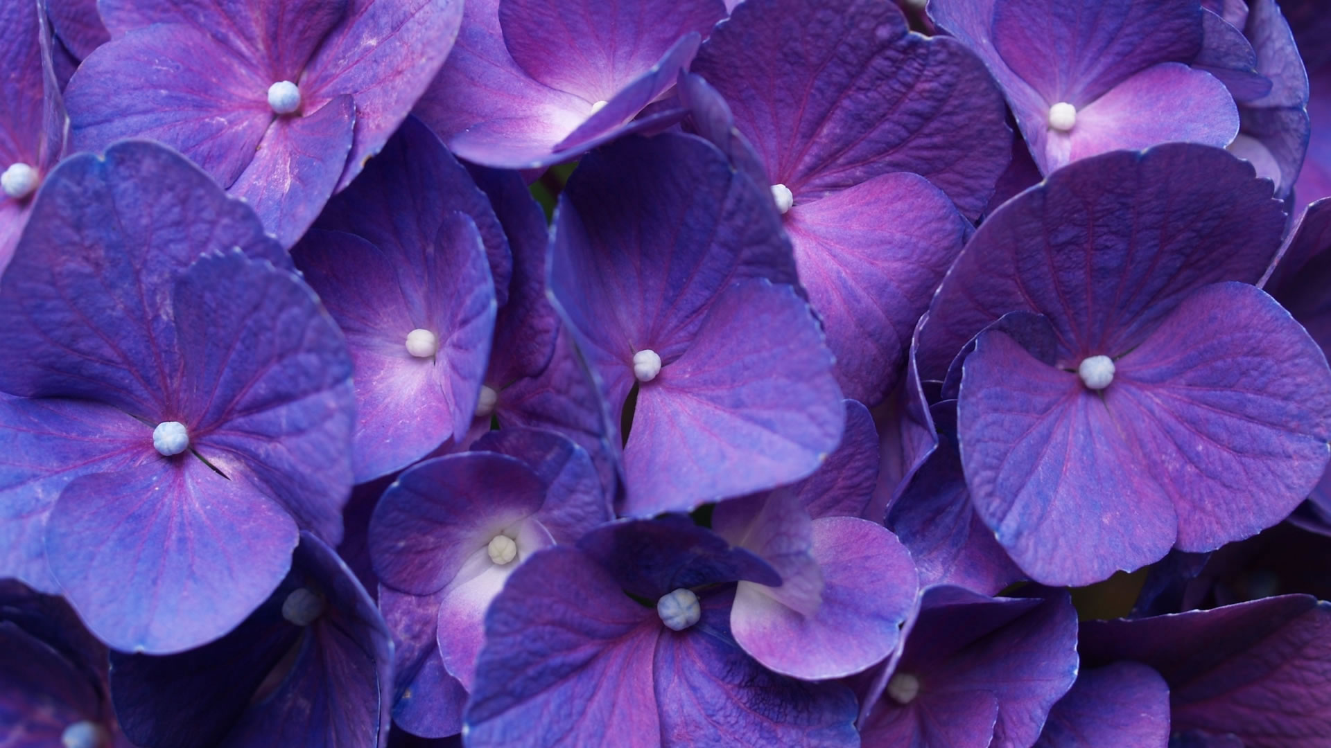 Trend Alert: Purple is the New Black!